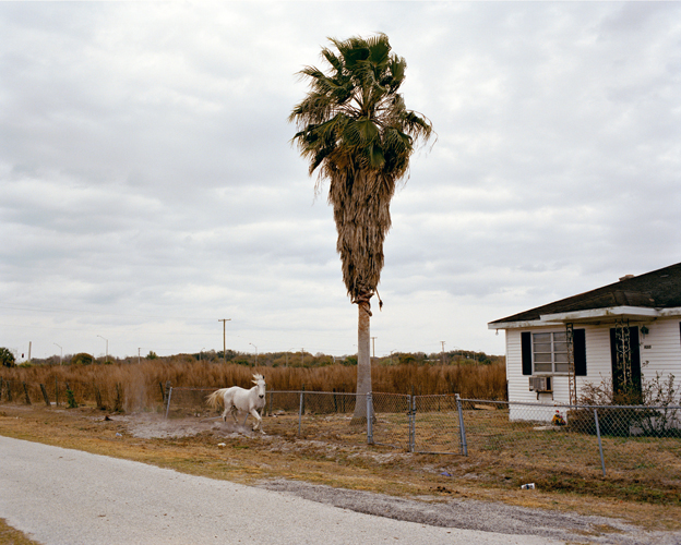 White Horse, Riverview, Florida, 2007