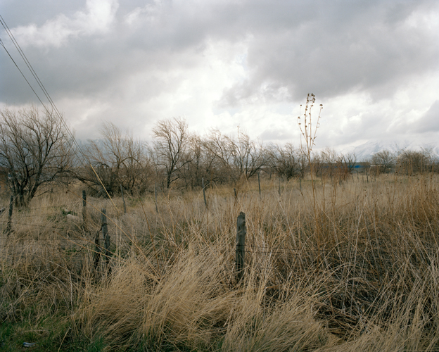Field of Sad Trees, Spanish Fork, Utah, 2008