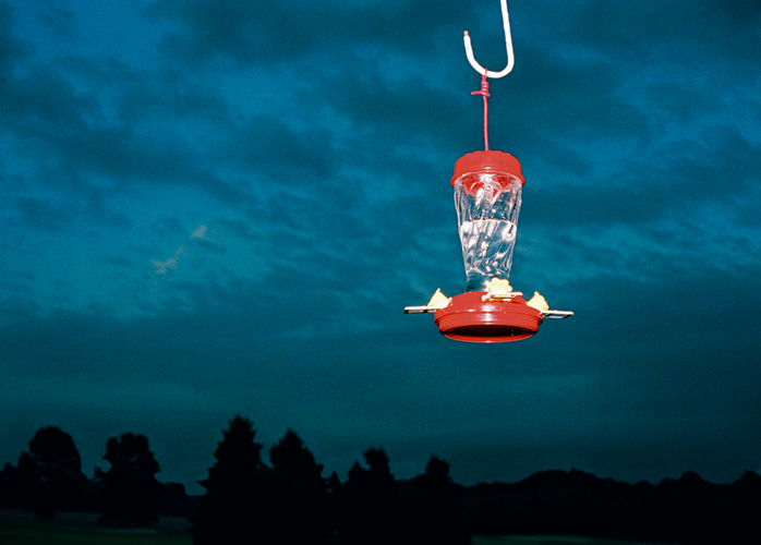 Bird Feeder, Michigan, 2001