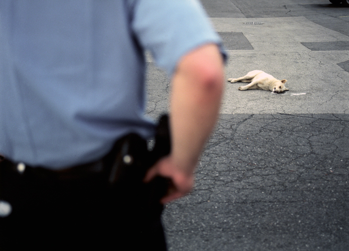 Officer views body of dog in parking lot of Antioch Haven Homes, Chicago, Illinois, 2000