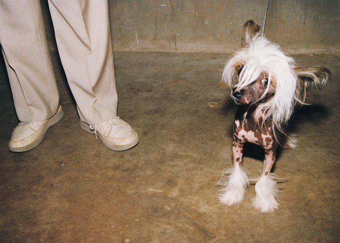Mexican Hairless, Kalamazoo County Fairgrounds, Kalamazoo, Michigan, 1998
