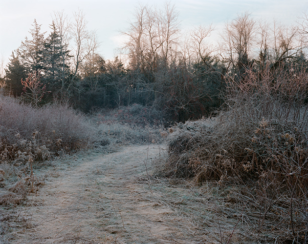 Winter Path, Livingston, New York, 2016