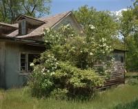 White Flowering Tree, County Route 9, New York, 2016 thumbnail