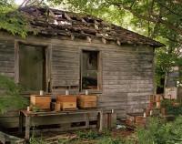 Bee Traps, Livingston, New York, 2017 thumbnail