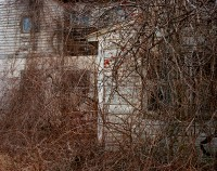 Winter Branches, Germantown, New York, 2016 thumbnail