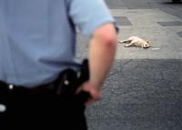 Officer views body of dog in parking lot of Antioch Haven Homes, Chicago, Illinois, 2000 thumbnail