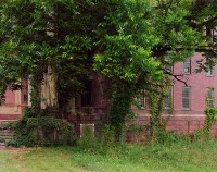 Tree, Central State Hospital, Milledgeville, Georgia, 2018 thumbnail