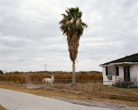 White Horse, Riverview, Florida, 2007 thumbnail